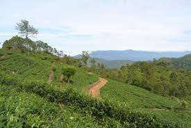 100 Green Tea House Alliance Production In Sri Lanka Wikipedia