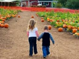 Tanaka Farms Pumpkin Patch by Best Photographic Pumpkin Patches In Orange County Cbs Los Angeles