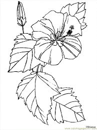 Flower Coloring Pages Hibiscus Page