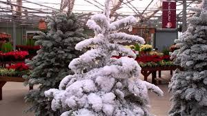 Flocked Christmas Tree Walmart by Flocking Styles Mp4 Youtube