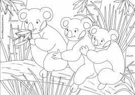 Koala Scene Colouring Page