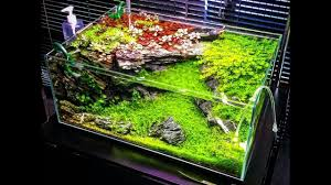 Best Aquascape Design Ideas 2017 - YouTube Aquascape Designs For Your Aquarium Room Fniture Ideas Aquascaping Articles Tutorials Videos The Green Machine Blog Of The Month August 2009 Wakrubau Aquascaping World Planted Tank Contest Design Awards Awesome A Moss Experiment Driftwood Sale Mzanita Pieces Two Gardens By Laszlo Kiss Mini Youtube Warsciowestronytop