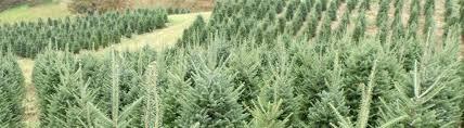 Christmas Tree Baler Used by Used Equipment Christmas Tree Management U0026 Supply Of Trees