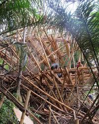 100 Ibuku Elora Hardy IBUKU Studio On Instagram Bamboo Buildings Are Like