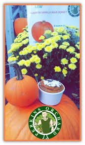 Pumpkin Patch Raleigh Durham Nc by Apple Cider New Fresh Picked Pumpkins In Patch U2014 Perkins Orchard