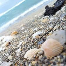 Bathtub Beach Stuart Fl Beach Cam by 90 Best Stuart Florida Images On Pinterest Stuart Florida