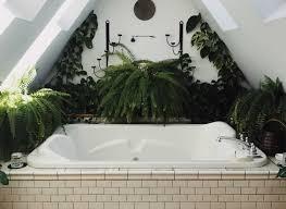 pflanzen im badezimmer impex