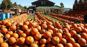 Knoxville Ia Pumpkin Patch by 5 Festivals To Celebrate Fall Harvest Visit The Usa