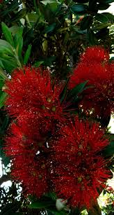 Christmas Tree Shop Riverhead by 477 Best Billeder Zealand Images On Pinterest New Zealand