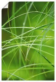 artland wandbild gräser im regenwald mit tautropfen spa 1 st in vielen größen produktarten alubild outdoorbild für den außenbereich