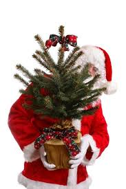 Christmas Tree Has Aphids by Caring For A Live Christmas Tree Thriftyfun