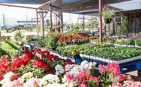 100 Angelos Landscape San Nursery Olives Nursery Olives Nursery San