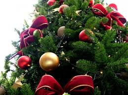 Christmas Tree Shop Deptford Nj Number by Patch Picks Where To Get Christmas Trees Collingswood Nj Patch