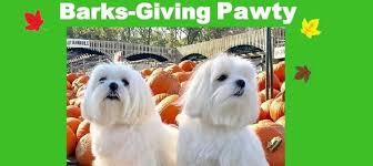 agape animal hospital barkhappy nashville barks giving pawty to benefit agape rescue