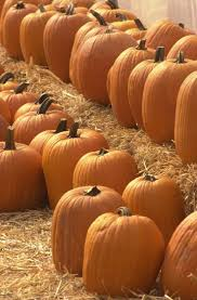 Powell Ohio Pumpkin Patch by 44 Best Show Me Missouri Images On Pinterest Missouri Kansas