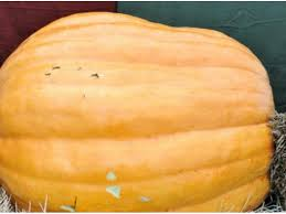 Pittsburgh Area Pumpkin Patches by Top 5 Pumpkin Patches In The East Brunswick Area Yelp East