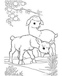Image Detail For Farm Animal Coloring Pages