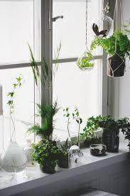 fensterbank dekoration blumentöpfe vasen hängepflanzen