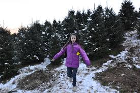 Leyland Cypress Christmas Trees Louisiana by December 2014 Finding Family Adventures