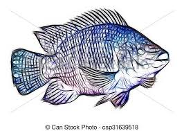 Tilapia Fish Fractals Mozambique Oreochromis Mossambicus