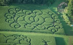 Best Pumpkin Patches Near Milwaukee by Home Treinen Farm Corn Maze U0026 Pumpkin Patch