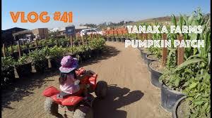 Tanaka Farms Pumpkin Patch by Tanaka Farms X Sanrio Pumpkin Patch Vlog 41 Youtube
