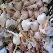 growing gourmet garlic part 4 bulb cracking and clove selection