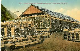 100 Pigeon Coop Plans Americans Used To Eat Pigeon All The Timeand It Could Be
