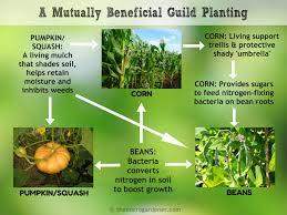 Natural Fertilizer For Pumpkins by 166 Best Garden Tips U0026 Techniques Images On Pinterest Garden