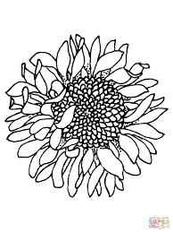 Coloriage Tournesol 28710 à Imprimer Pour Les Enfants Dessin Fleur