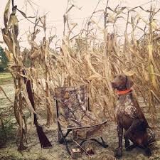 German Shorthaired Pointer Shed Hunter by 42 Best Pointer Love Images On Pinterest German Shorthaired