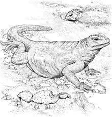 Click To See Printable Version Of Komodo Dragon Coloring Page