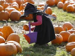 Pumpkin Patch Miami Lakes by The Most Popular Instagram Photos Of The Year Taken By Reuters