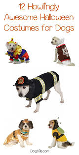 Cookie Clicker Beta Halloween by 83 Best For The Dogs Images On Pinterest Dog Care A Dog And