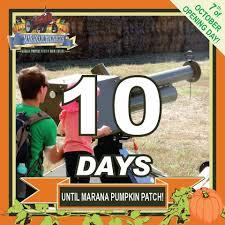 Marana Pumpkin Patch Festival Marana Az by Marana Pumpkin Patch U0026 Farm Festival Posts Facebook