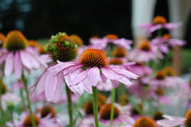 Mountain Rose Herbs Offers Grants To Projects In Sustainable ... Sales Deals 30 Off Mountainroseherbscom Coupons Promo Codes January Amazoncom Genesis Salt Truffle Grocery Gourmet Food Recommended Suppliers Affiliates Other Links The Nova Extra 15 Mountain Rose Herbs Coupon Verified 26 Mins Ago Museum Of Natural History Parking Coupon Infinite Tan And 25 Diffuser World Top 20 Royalkartin Code Jan20 Codes For Volaris Football Tips Uk Ibex Allegra D Printable Coupons Bulkapothecary Hashtag On Twitter Blessed Herbs Free Shipping Jessem Tool Code