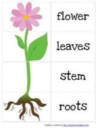 Gardening Preschool Pack From Homeschool Creations