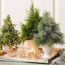 13 Small Christmas Trees For Any Budget And Space