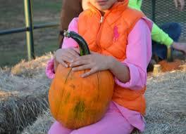 Hartsburg Pumpkin Festival 2015 Dates by The 25 Best Pumpkin Field Ideas On Pinterest Fall Season