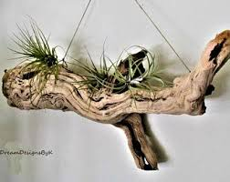 Image Result For Driftwood Wall Art
