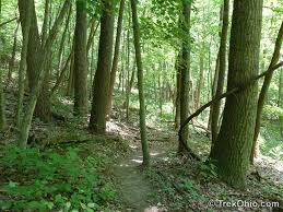 Plantable Christmas Trees Columbus Ohio by Christmas Rocks State Nature Preserve Trekohio