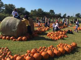 Pumpkin Patch Austin Texas 2015 by 5 Fun Things About Barton Hill Farms U2013 Do512 Family