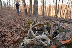 Deer Antler Shed Hunting by When And Where To Look For Shed Antlers Head Hunters Tv