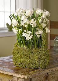 paperwhite bulbs in a gift basket inbal variety gardeners