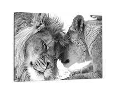 schönes bezauberndes kuschelndes löwenpaar in afrika in der