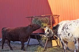 cattle loafing shed plans pdf diy shed plans eunic