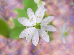 White Wildflower Print Spring Wildflowers Pastel Home Decor Springtime Mountain Green
