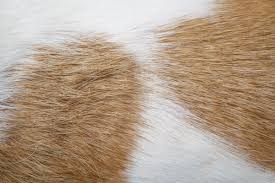 Do All Dogs Shed Their Fur by Shedding And Different Coat Types Fcl Professional Dog Grooming