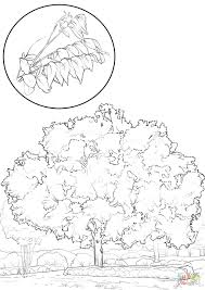 Click Pecan Tree Coloring Pages Page Trunk Frog Of Life Full Size