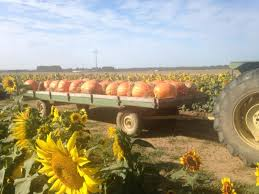 Motley Pumpkin Patch by 12 Pumpkin Patches In Arkansas That Are Picture Perfect For A Fall Day